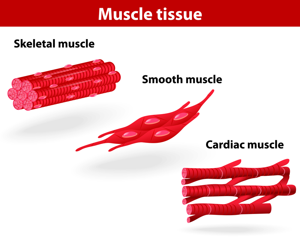 Muscle Disorders 84