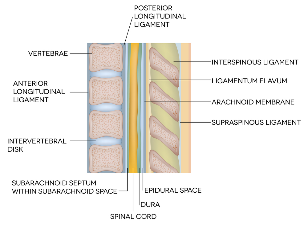 Spinal Cord Injuries Spinal Neuro Conditions